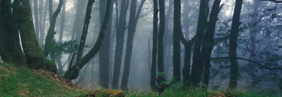 Reservas y Áreas Protegidas